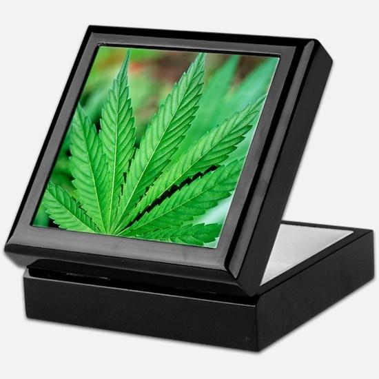 Cannabis leaves Keepsake Box