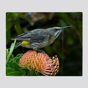 Cape sugarbird on a flower Throw Blanket