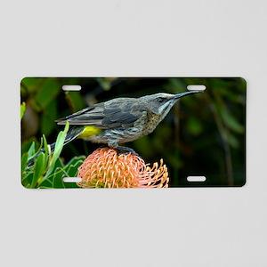 Cape sugarbird on a flower Aluminum License Plate