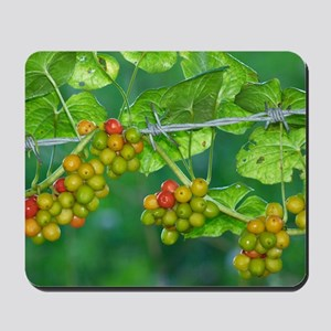Black Bryony (Tamus communis) berries Mousepad