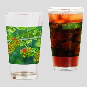 Black Bryony (Tamus communis) berri Drinking Glass