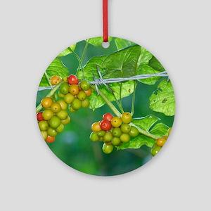 Black Bryony (Tamus communis) berri Round Ornament