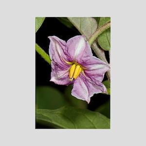 Aubergine (Solanum melongena) flo Rectangle Magnet