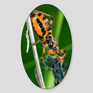 Assassin Bug Sticker (Oval)