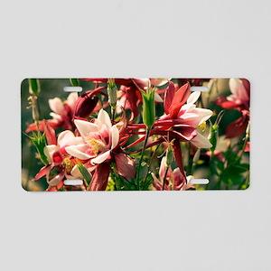 Aquilegia caerulea 'Red Hob Aluminum License Plate