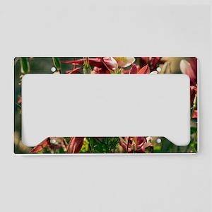 Aquilegia caerulea 'Red Hobbi License Plate Holder