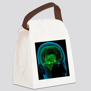 Amygdala in the brain, artwork Canvas Lunch Bag