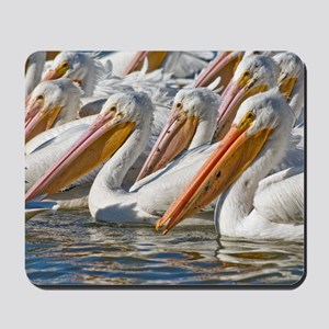 American white pelicans Mousepad