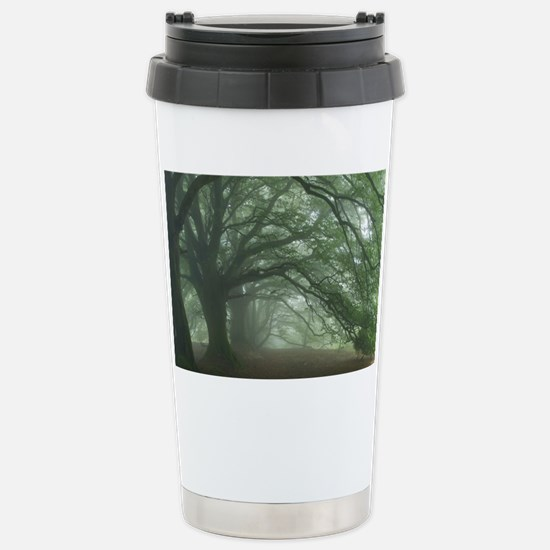 Ancient Beech woodland Stainless Steel Travel Mug