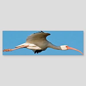 American white ibis Sticker (Bumper)