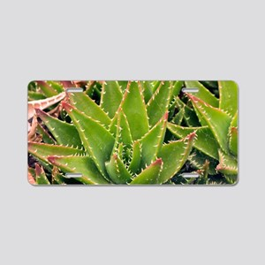 Aloe brevifolia Aluminum License Plate
