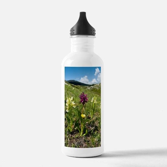 Actylorhiza sambucina Water Bottle