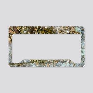 Brindled beauty butterfly License Plate Holder