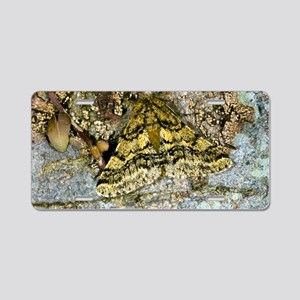 Brindled beauty butterfly Aluminum License Plate