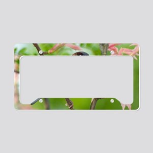 A male House Sparrow License Plate Holder