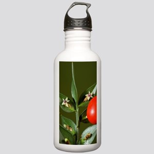 Butcher's Broom (Ruscu Stainless Water Bottle 1.0L