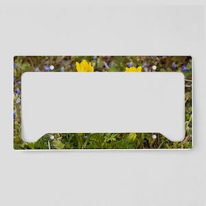 Buttercup (Ranunculus millii) License Plate Holder