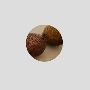 Brown mustard seeds, SEM Mini Button