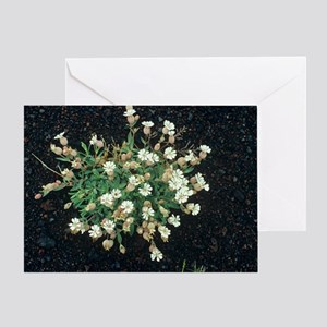 Bladder campion flowers Greeting Card