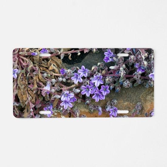 Bellflower (Campanula topal Aluminum License Plate
