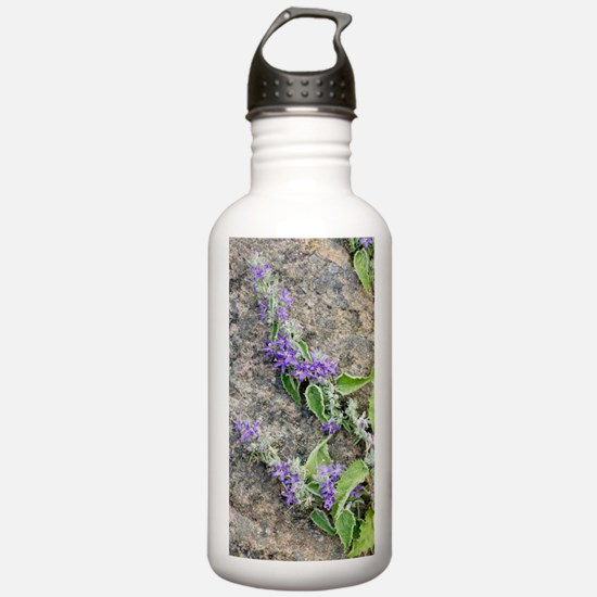 Bellflower (Campanula  Water Bottle
