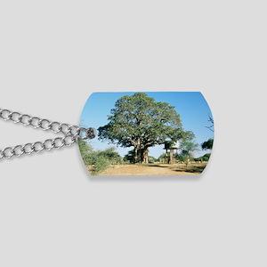 Baobab tree (Adansonia digitata) Dog Tags