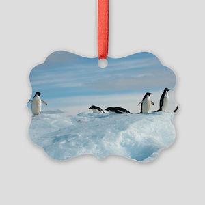 Adelie penguins Picture Ornament
