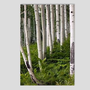 Aspen (Populus tremuloide Postcards (Package of 8)