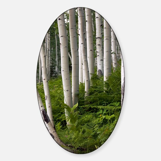 Aspen (Populus tremuloides) Sticker (Oval)