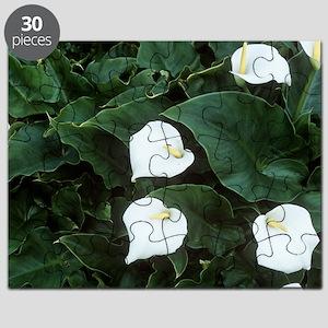 Arum lily (Zantedeschia aethiopica) Puzzle