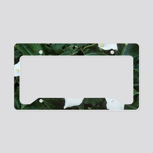 Arum lily (Zantedeschia aethi License Plate Holder