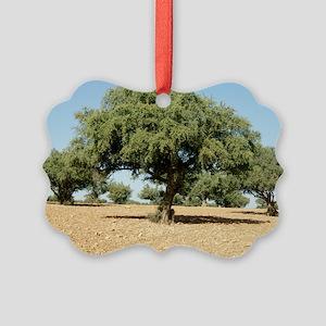 Argan trees (Argania spinosa) Picture Ornament