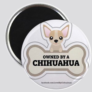 Owned by a Chihuahua Magnet