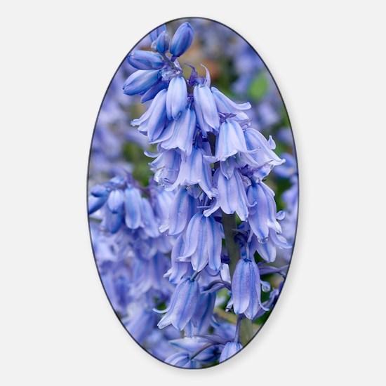 Bluebells (Hyacinthoides hispanica) Sticker (Oval)