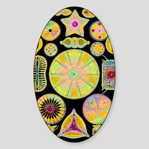 Art of diatom algae (from Ernst Hae Sticker (Oval)