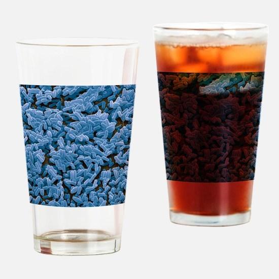 Bacillus subtilis bacteria, SEM Drinking Glass