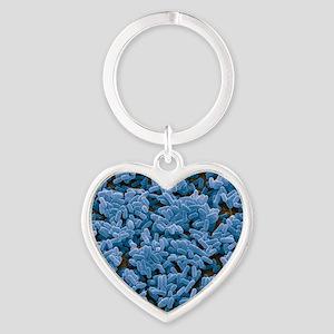 Bacillus subtilis bacteria, SEM Heart Keychain