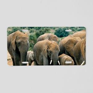 African bush elephants Aluminum License Plate