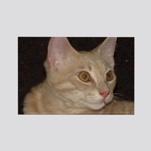 Goldeneyed cat Rectangle Magnet