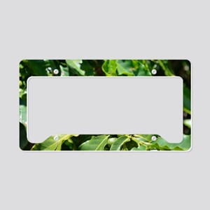 Green Coffee Berries License Plate Holder
