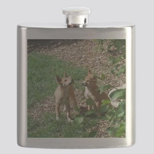 dingo puppies Flask