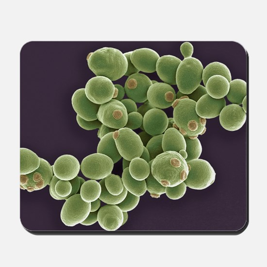 Yeast cells, SEM Mousepad