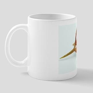 Silicoflagellate, SEM Mug