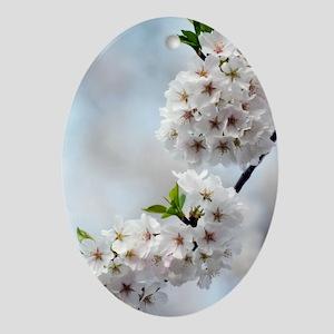 Yoshino cherry (Prunus x yedoensis) Oval Ornament