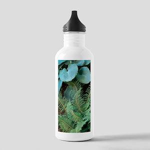 Polystichum setiferum  Stainless Water Bottle 1.0L
