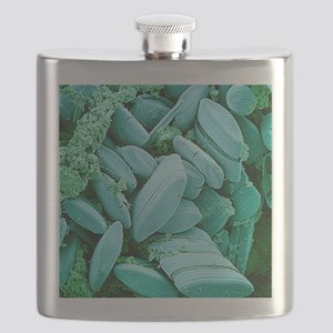 Diatoms, SEM Flask