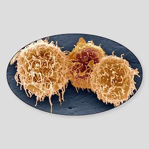 White blood cells, SEM Sticker (Oval)