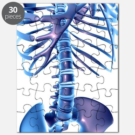 Spine, computer artwork Puzzle