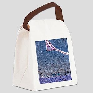 Purkinje cells, light micrograph Canvas Lunch Bag