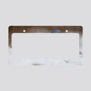 Wood pigeon in snow License Plate Holder